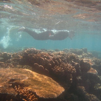 Snorkeling the GBR